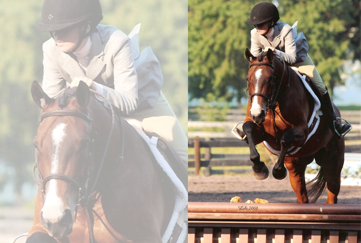 eventing_horses