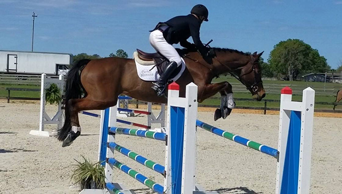 Jay of Diamonds horse for sale